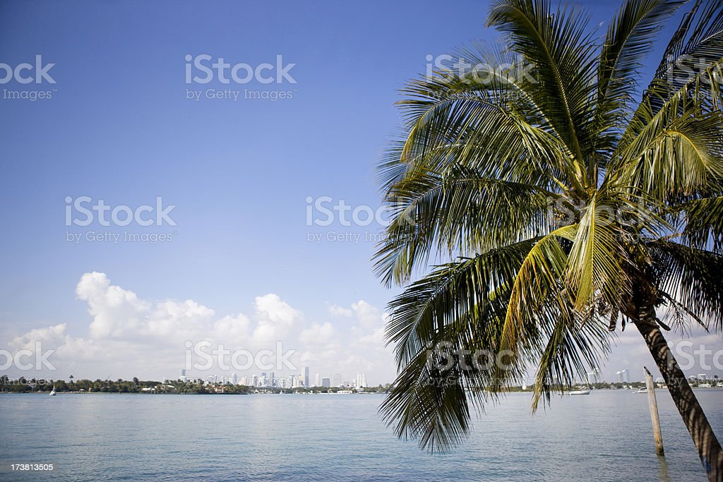 Seascape with Palm Tree royalty-free stock photo