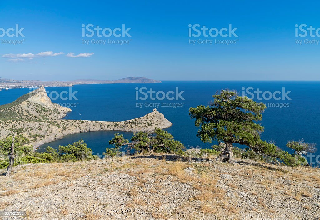 Seascape with relict juniper trees. Crimea. stock photo