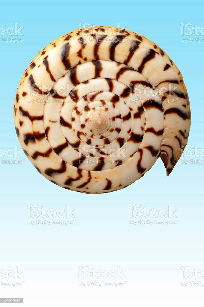 Seashell 4 royalty-free stock photo