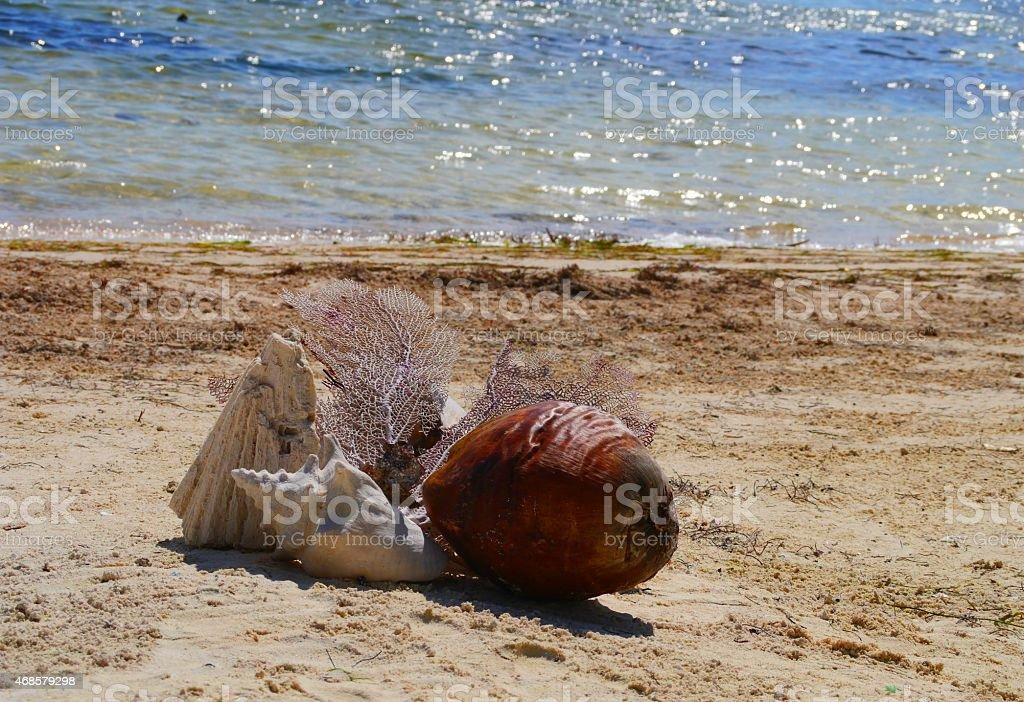 seashell at the beach Holiday summer Mexico stock photo