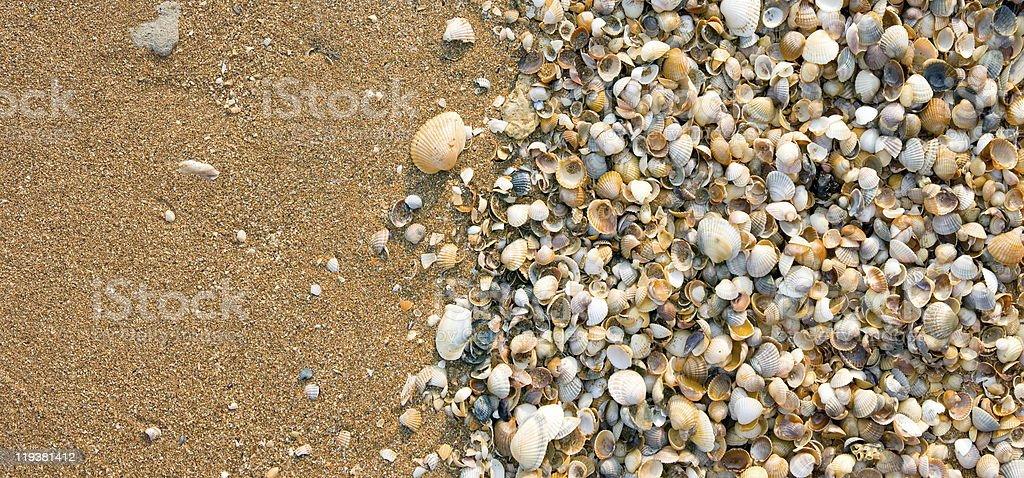 Seashell background. royalty-free stock photo