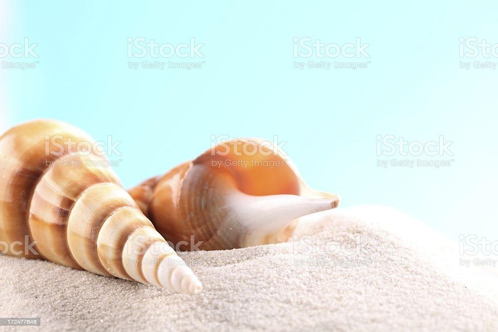 Seashell background royalty-free stock photo