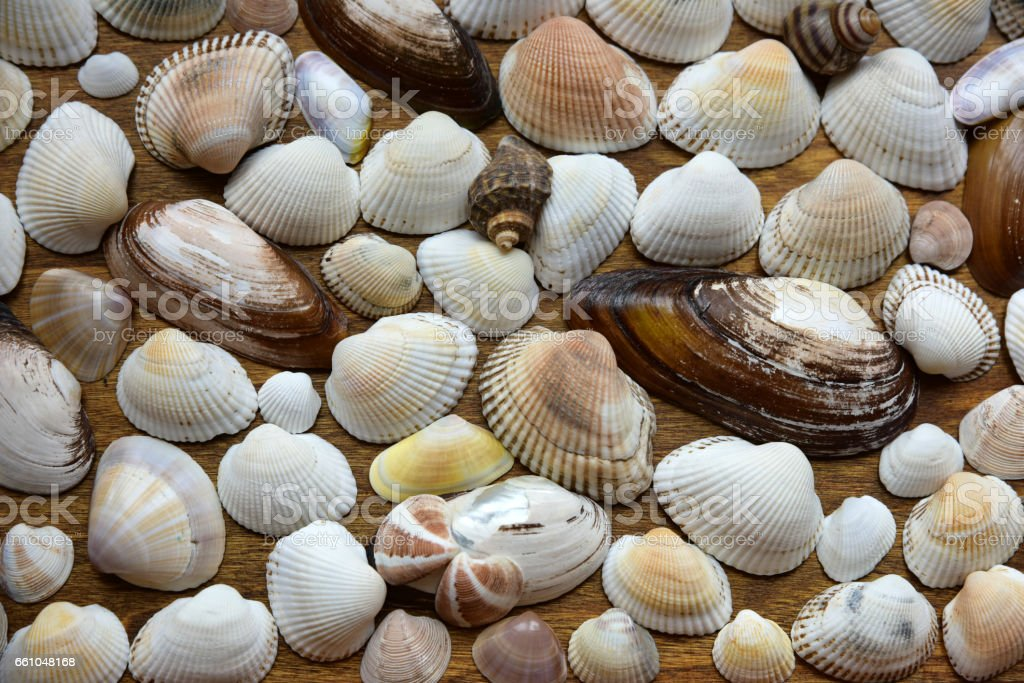 Seashell Background. stock photo