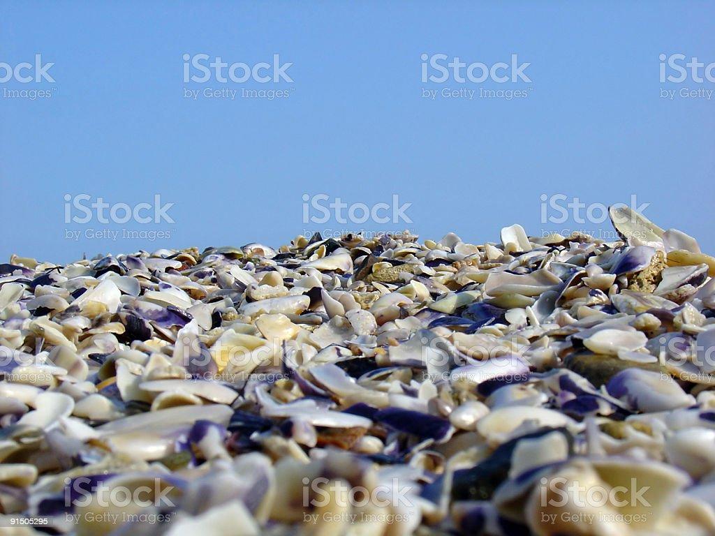 Seashell beach royalty-free stock photo
