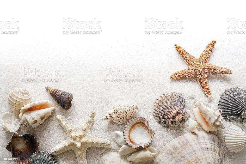 Seashell, Beach Sand and Starfish Frame Border on White Background royalty-free stock photo