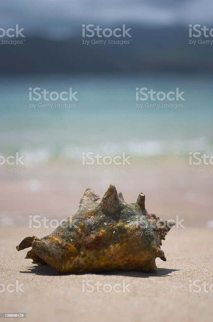 Seashell by the Sea Shore stock photo