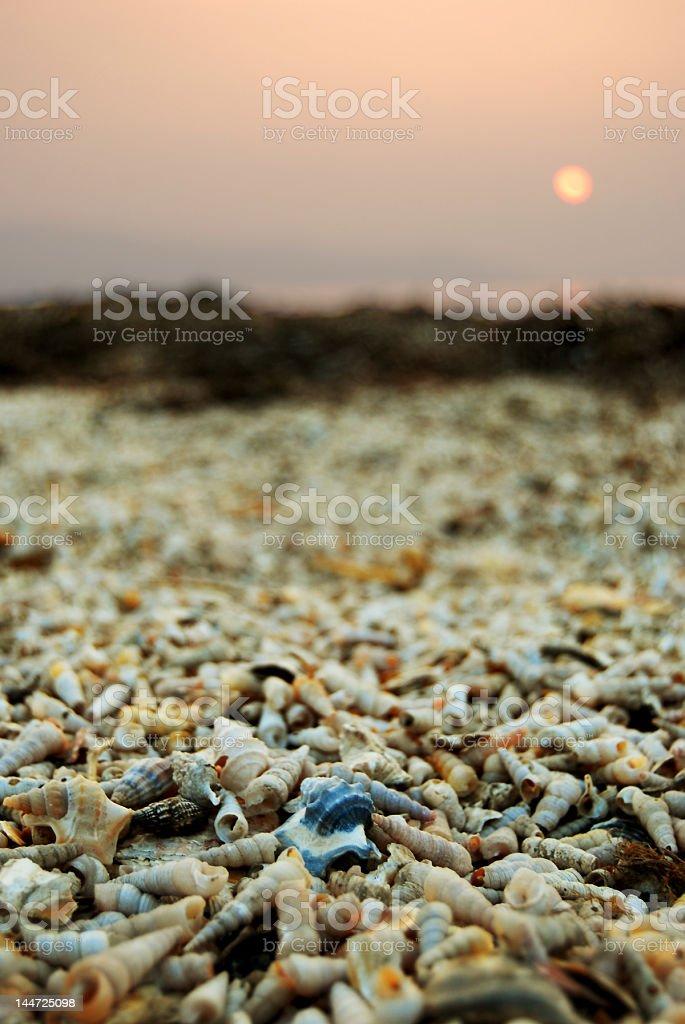 Cimetière des coquillages au coucher du soleil photo libre de droits