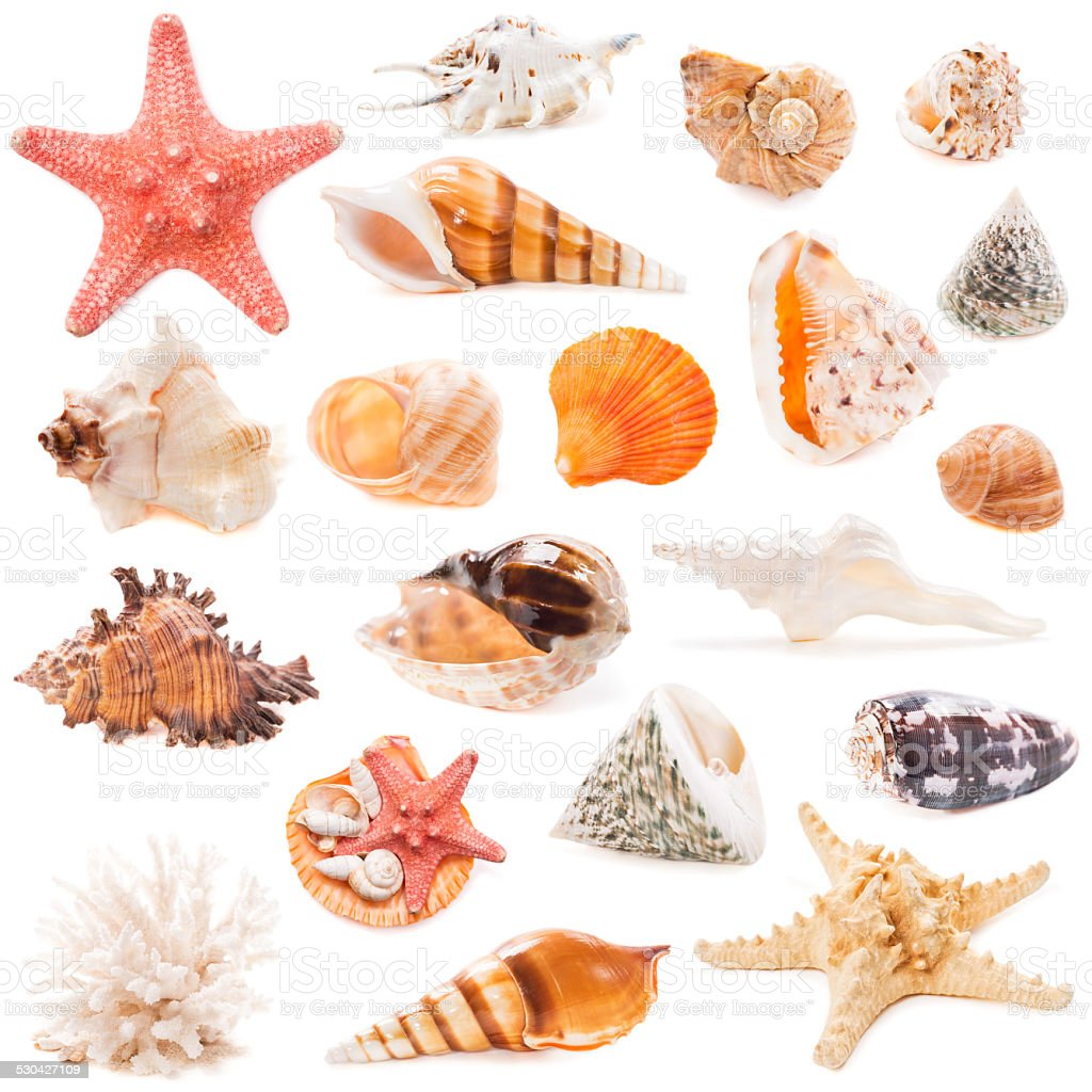 Seashell collection isolated on white background stock photo