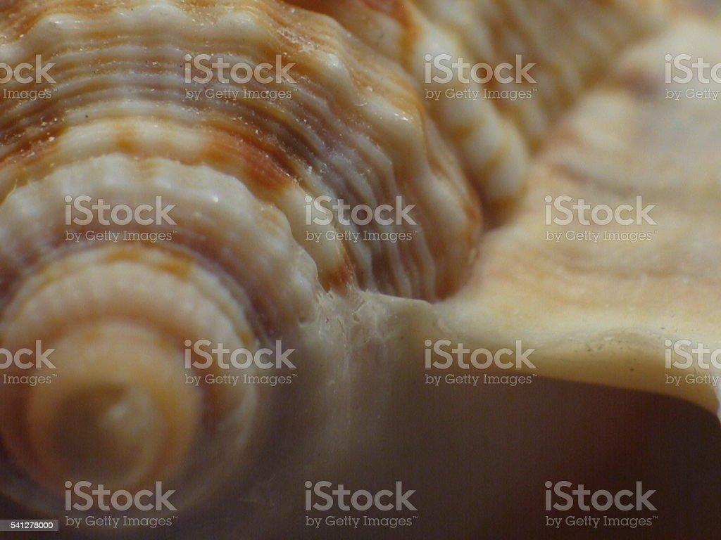 Seashell curves and swirls stock photo