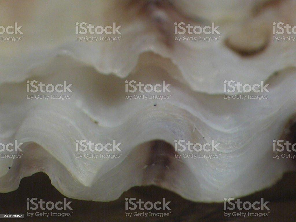 Seashell curves stock photo