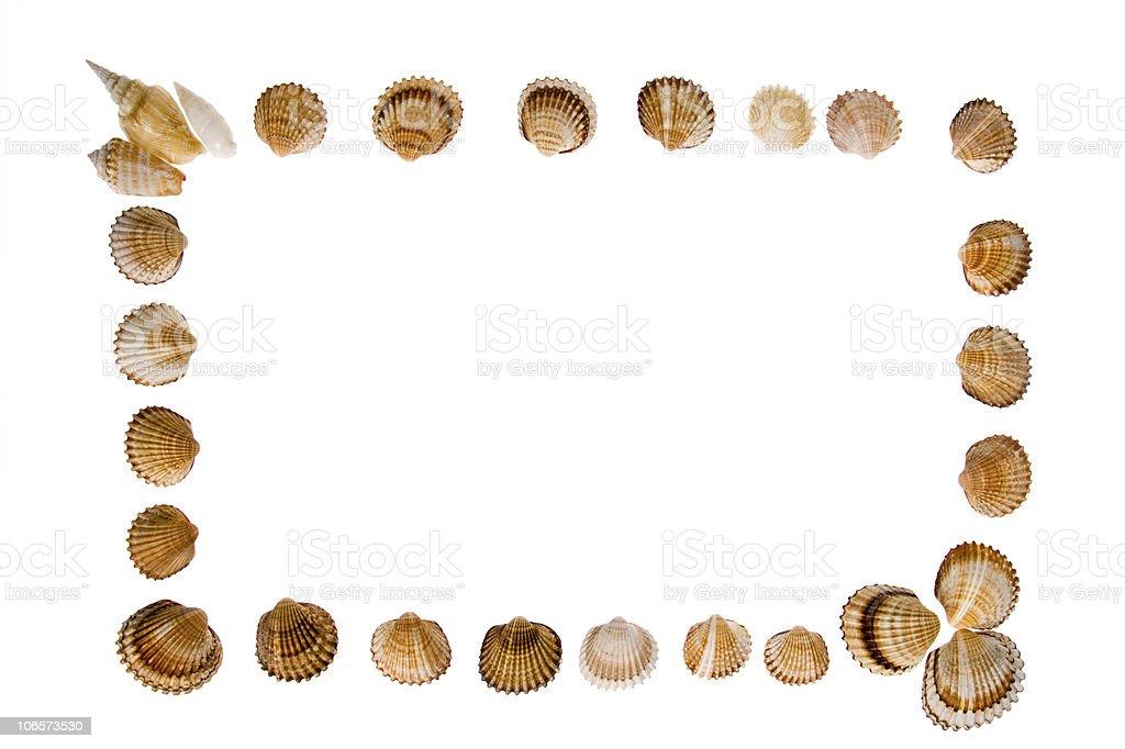 seashell - frame on white stock photo