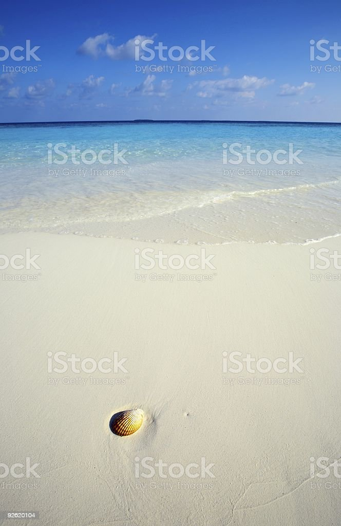 Seashell is on a beach royalty-free stock photo
