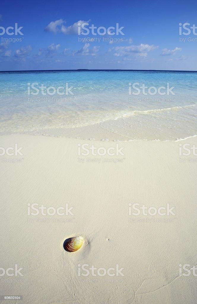Seashell is on a beach stock photo
