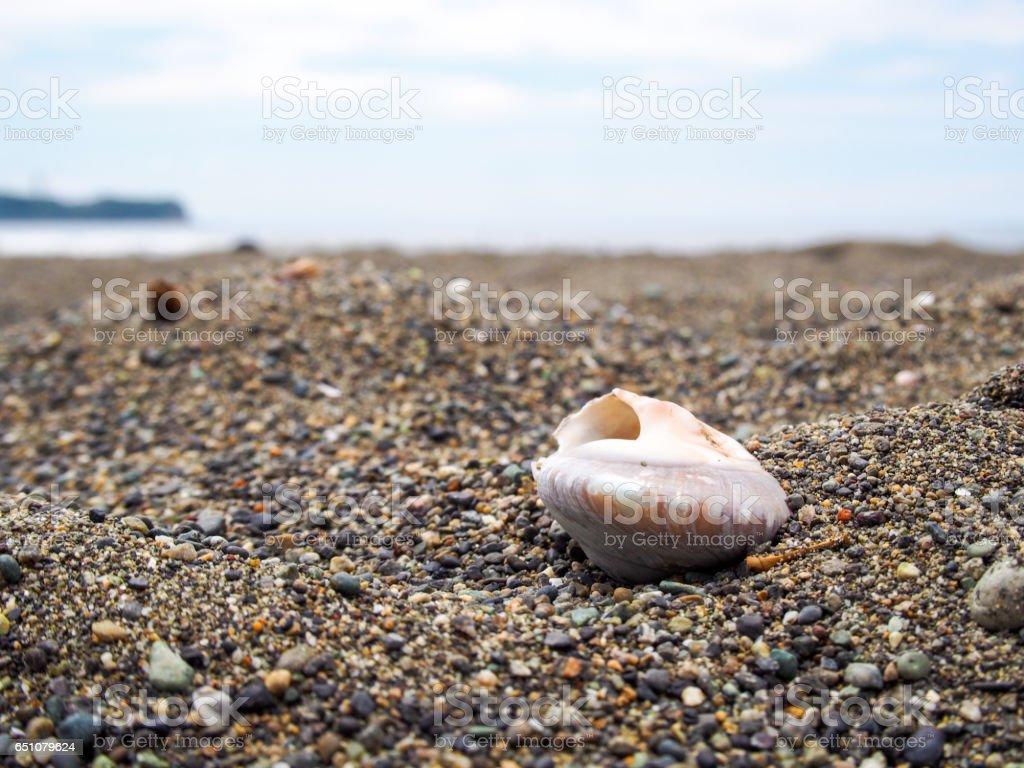 Seashell of sandy beach stock photo