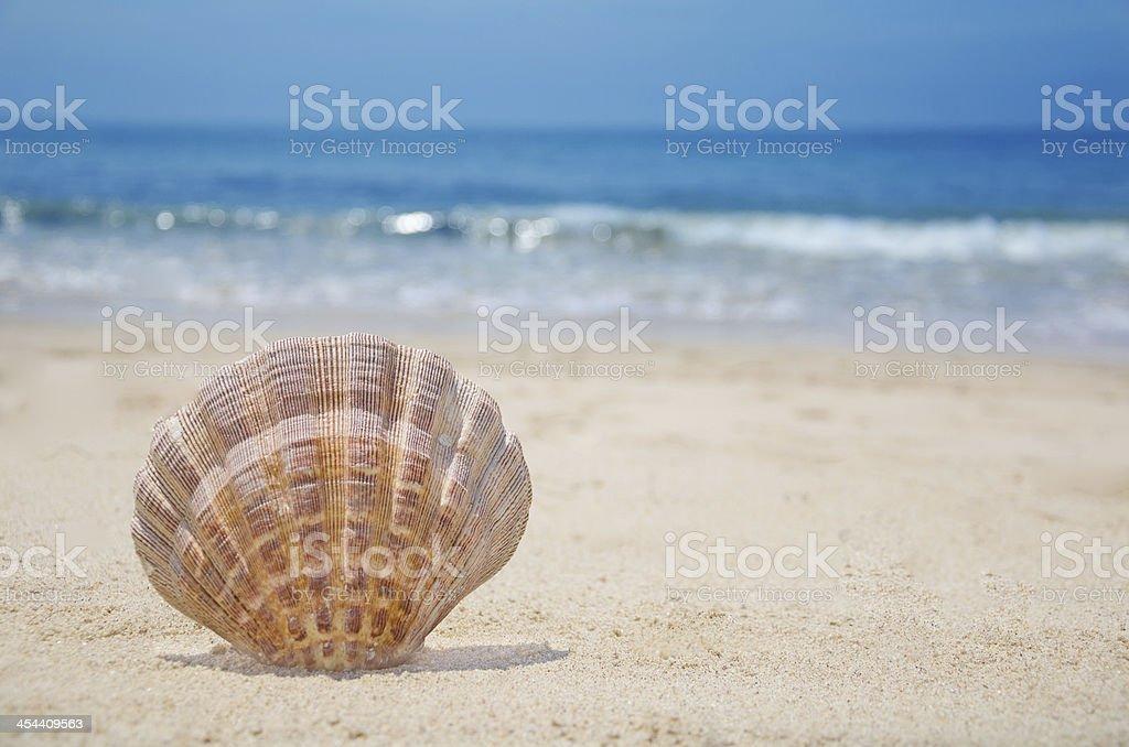 Seashell on a beach royalty-free stock photo