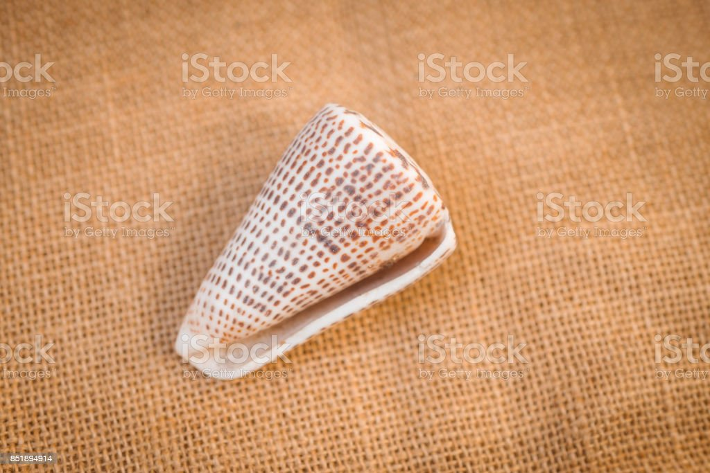 Seashell on a warm fabric artist background stock photo