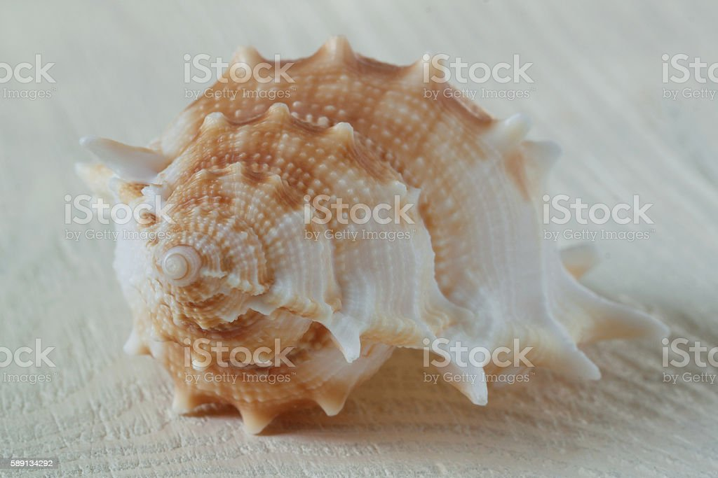 seashell on a white table stock photo