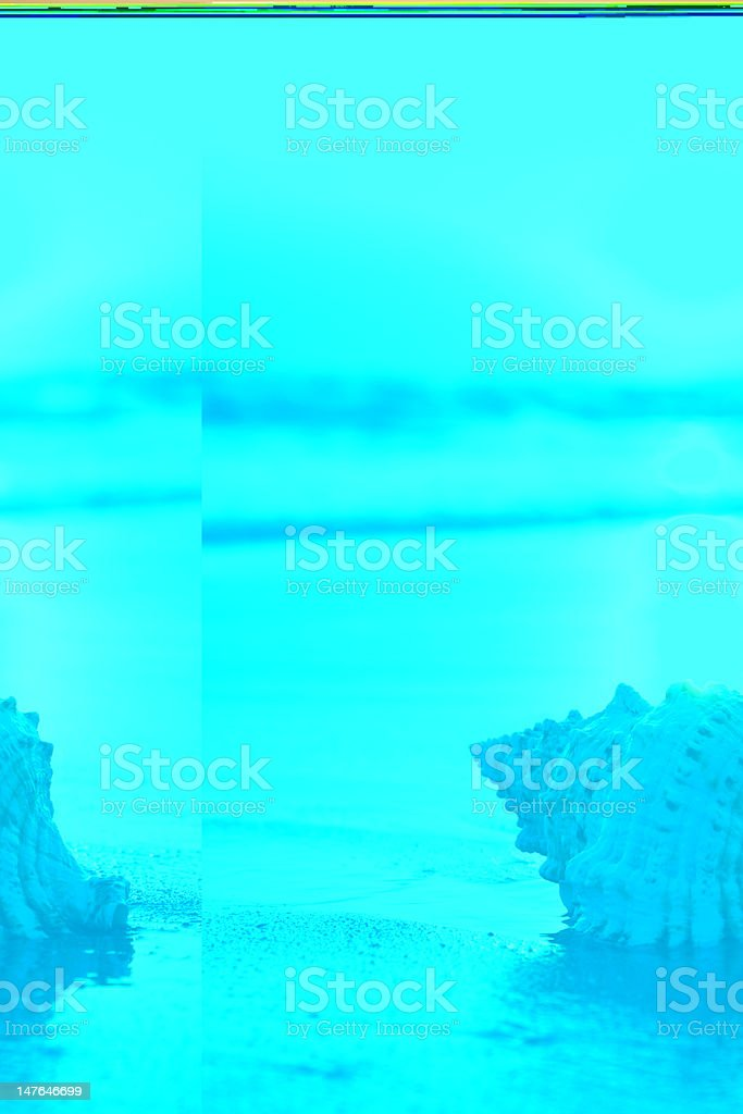 Seashell on beach. stock photo