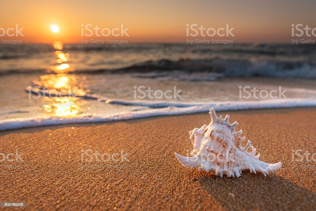 Seashell on the sand at the beach early in the morning stock photo