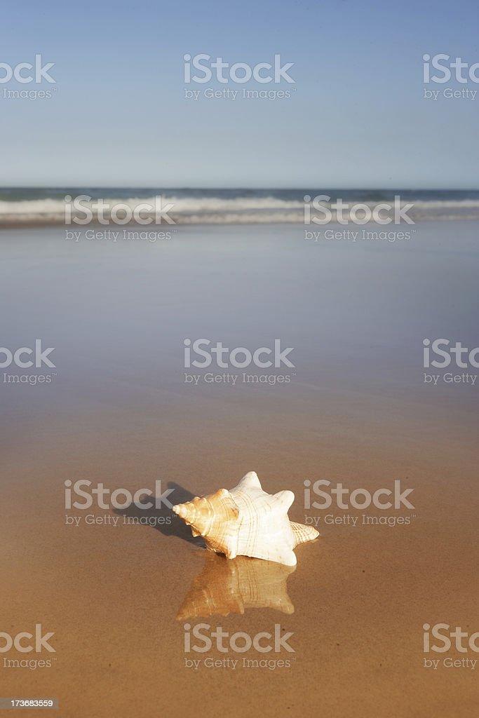Seashell on the Seashore royalty-free stock photo