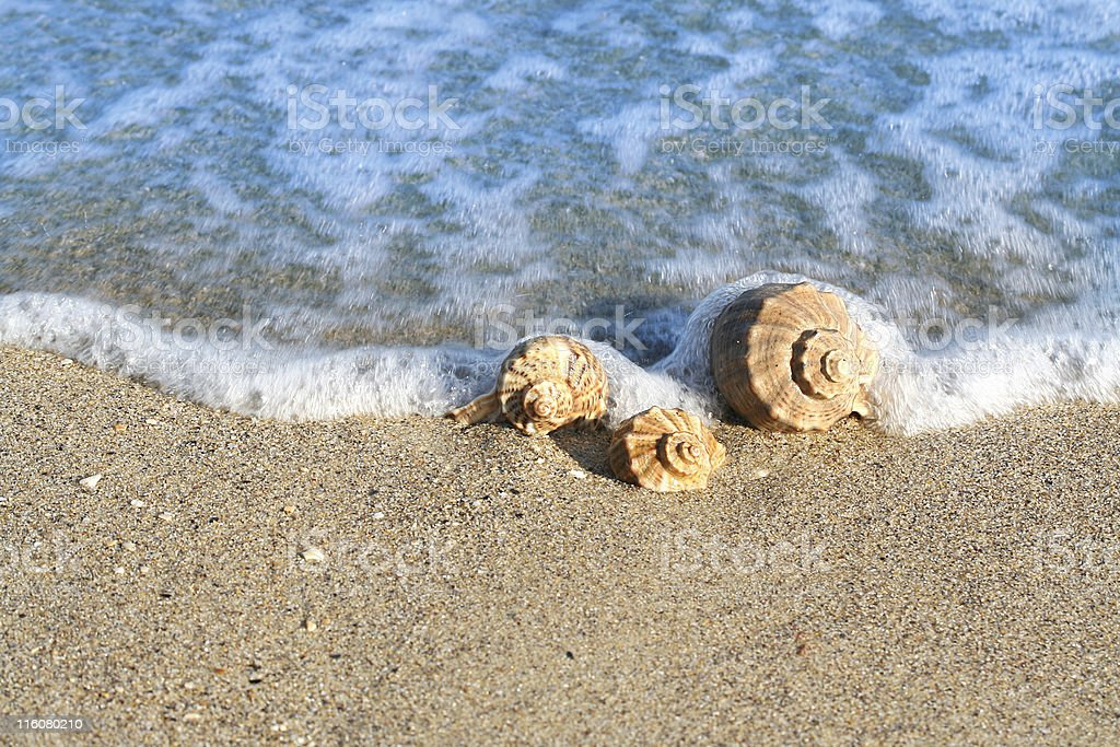 Seashell on the seashore with wave royalty-free stock photo