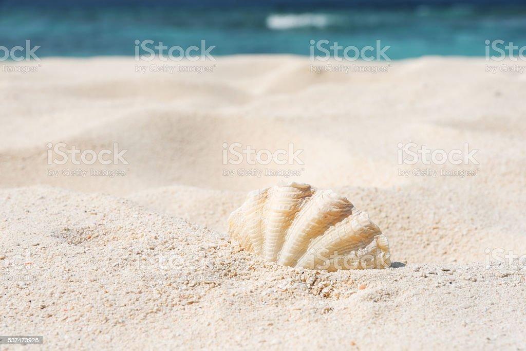 Seashell on the sunny beach stock photo