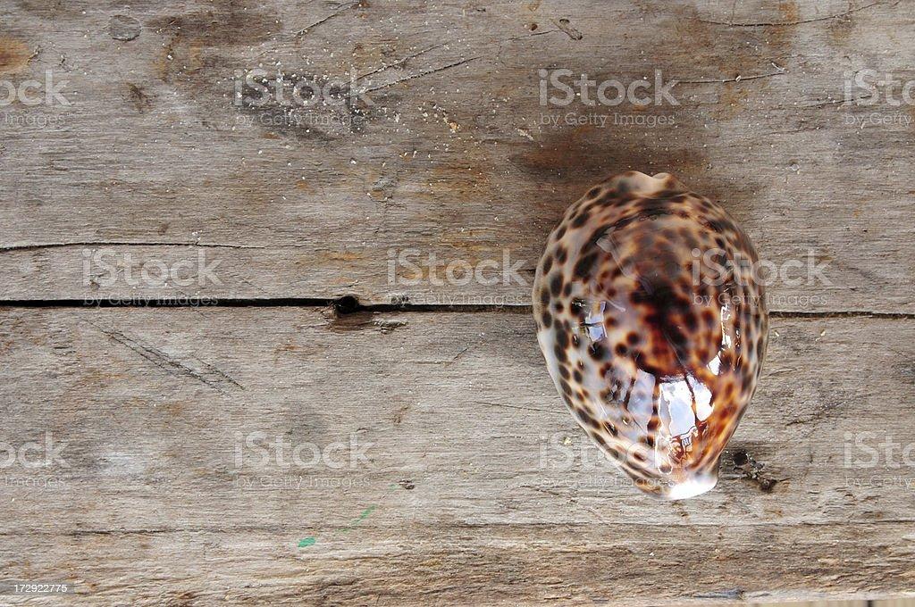 Seashell on Wood Series stock photo