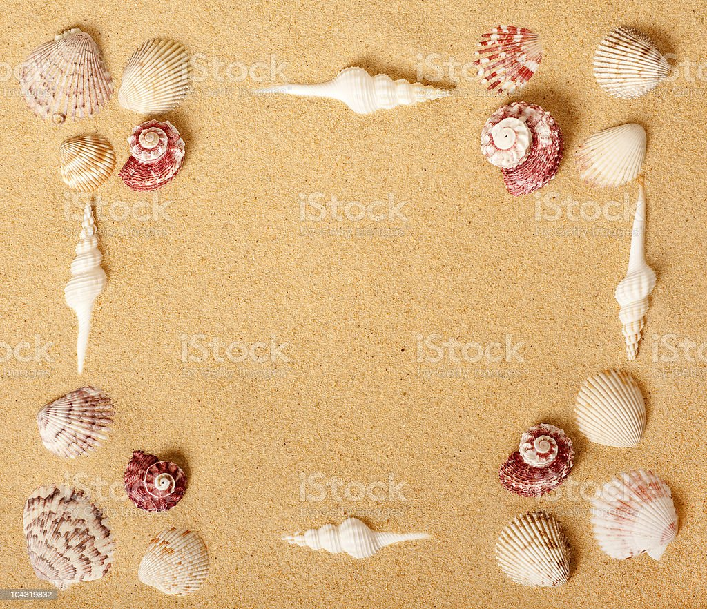 Seashell Picture Frame stock photo
