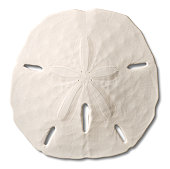 Seashell - Sand Dollar with Drop Shadow. Clipping Path.