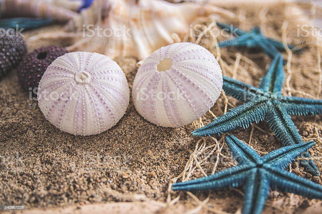 Seashell, starfish and sea-urchin on a sand background stock photo