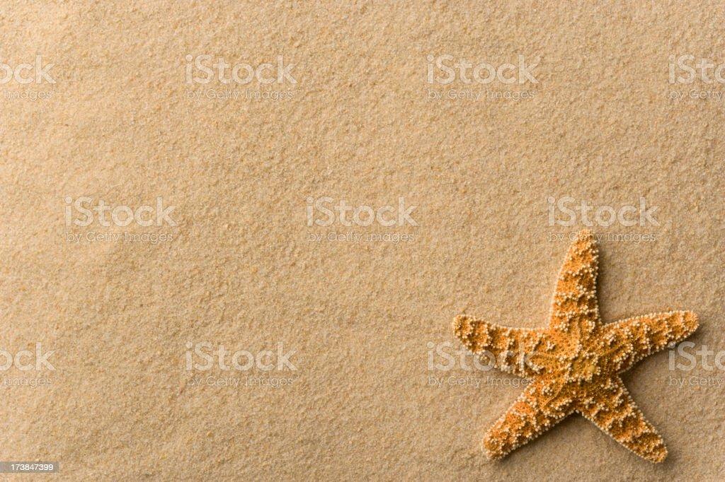 Seashell - Starfish on Beach Background. Horizontal. Full Frame. royalty-free stock photo