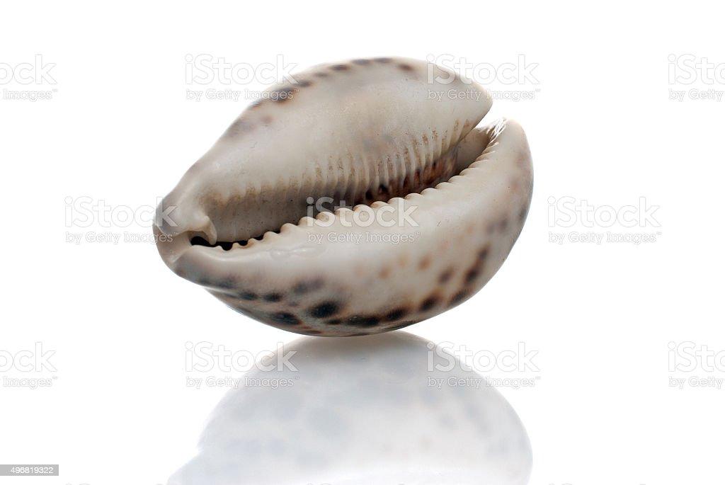 Seashell with dark spots stock photo