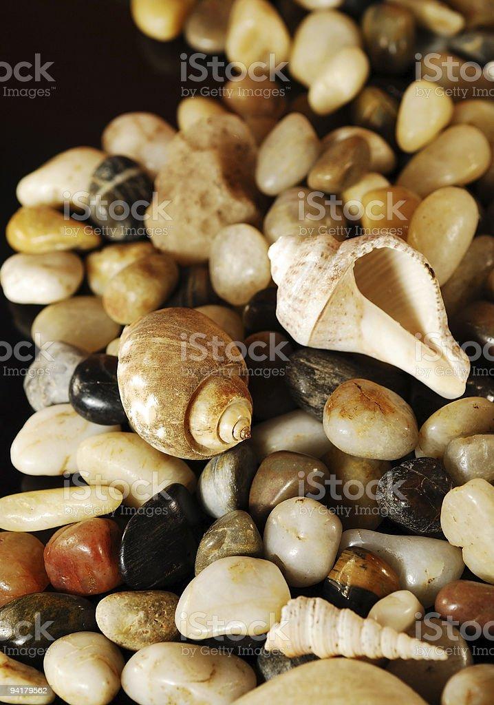 seashells and pebbles background stock photo