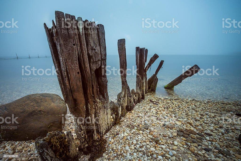 Seashells and Piling stock photo