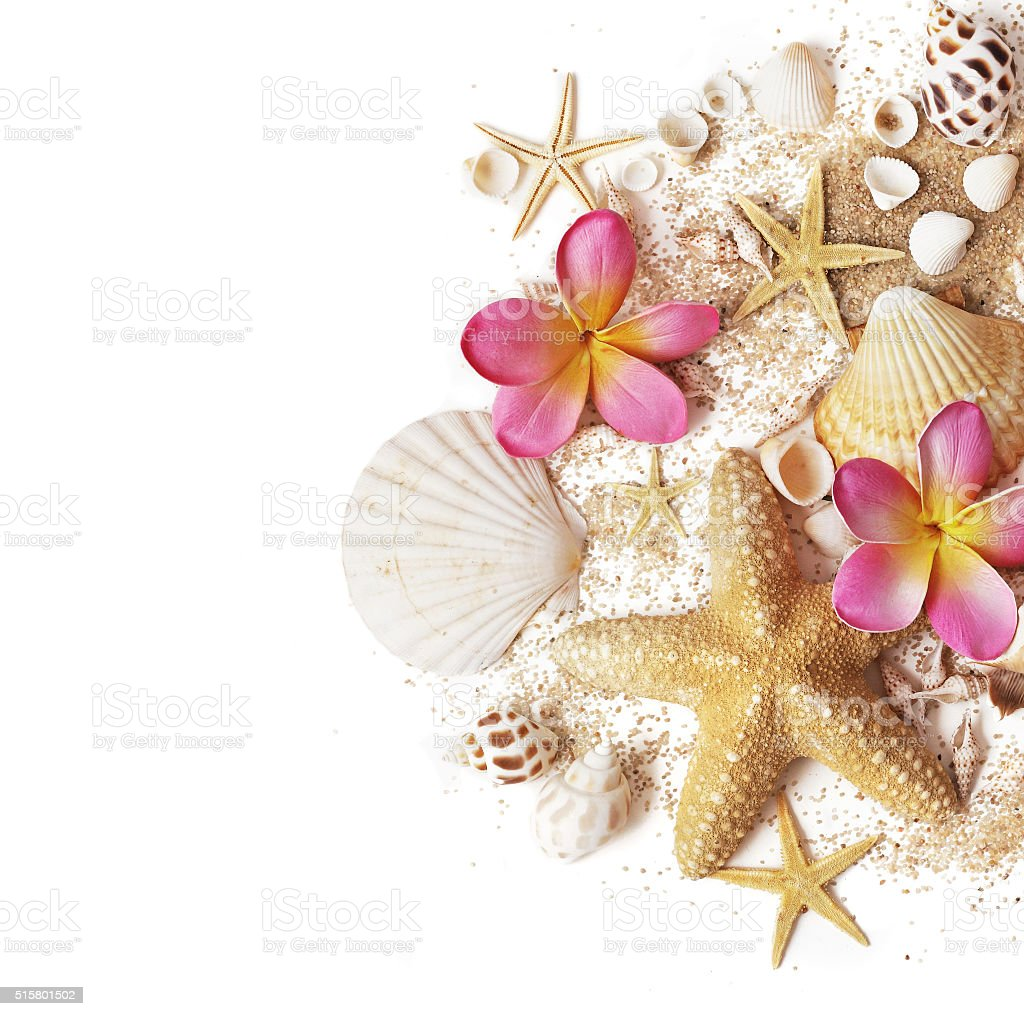 seashells and sand stock photo