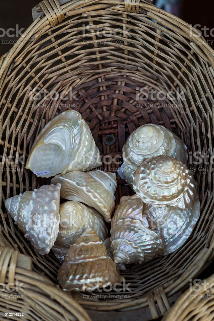 Seashells and snail shells decoration in a basket stock photo
