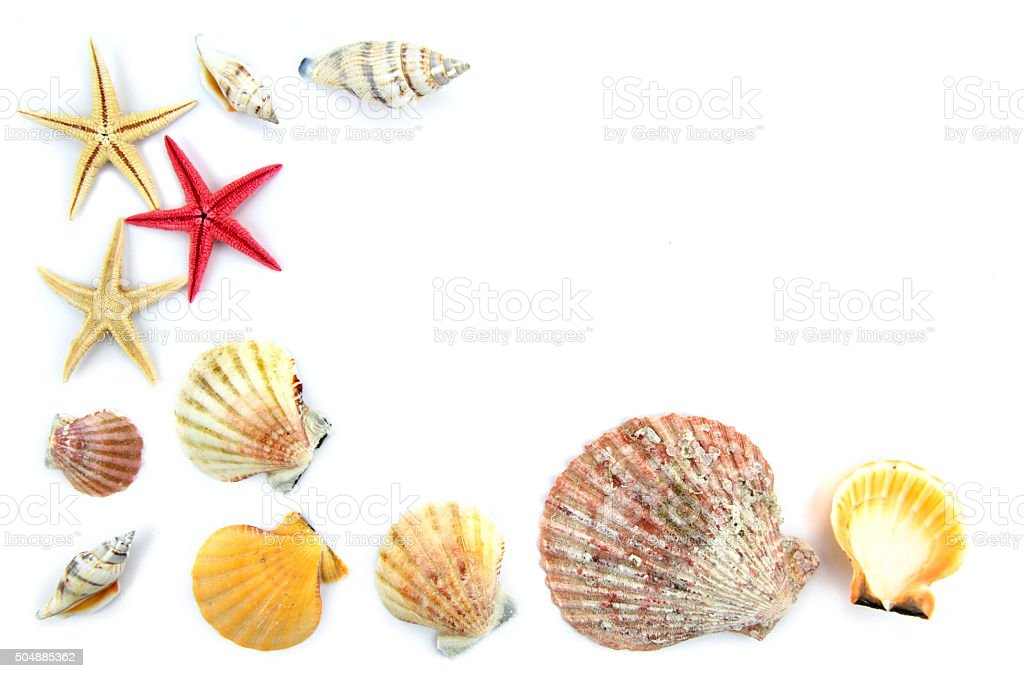 Seashells and starfishes as background stock photo