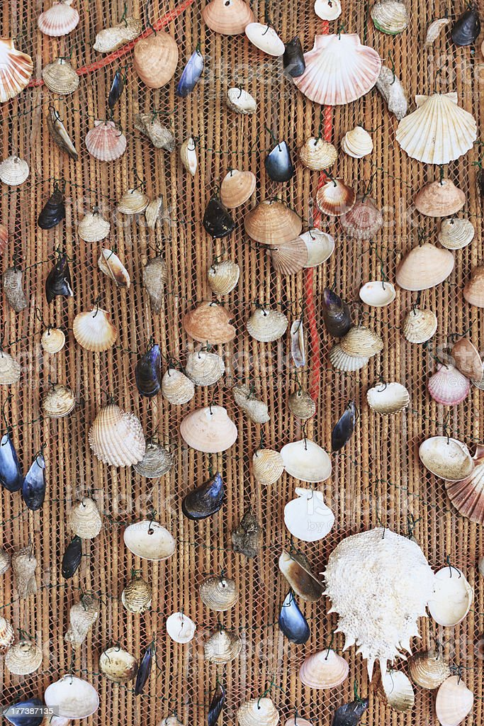 Seashells background stock photo