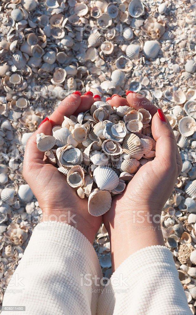 Seashells in the girl`s hands stock photo