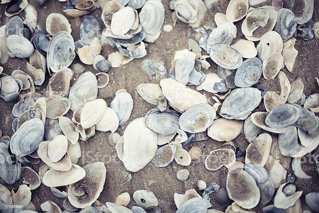Seashells in the sand royalty-free stock photo