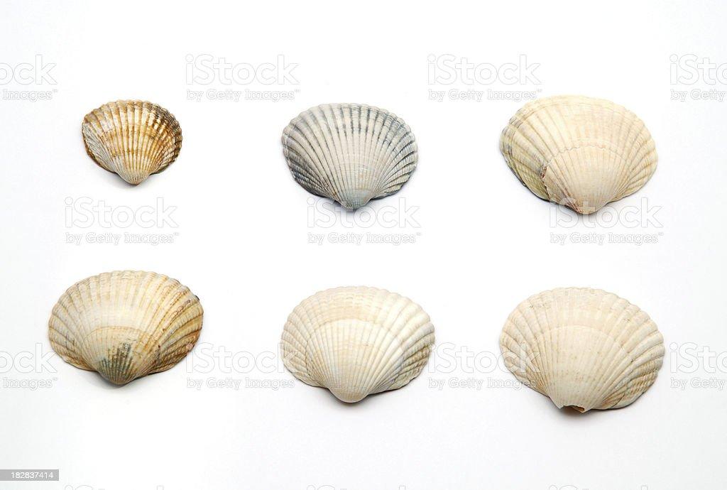 Seashells isolated on white royalty-free stock photo