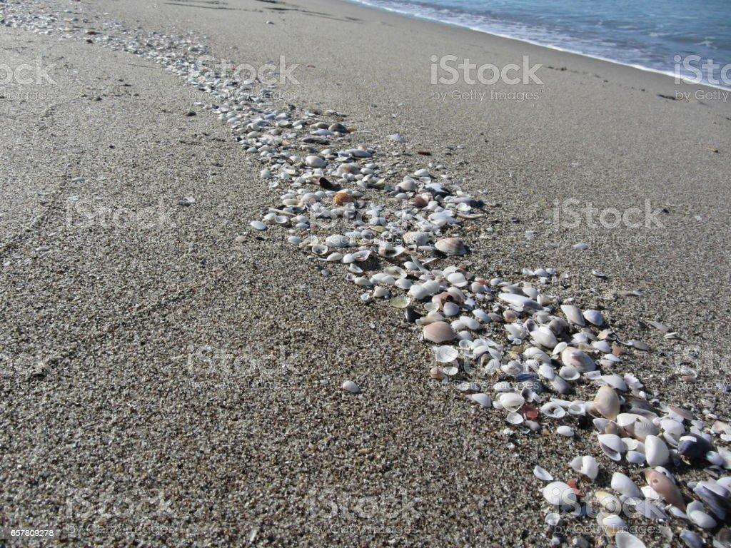 Seashells on sand. Summer beach background. Top view stock photo