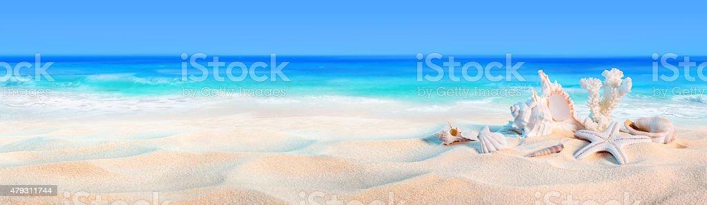 seashells on seashore - beach holiday background stock photo