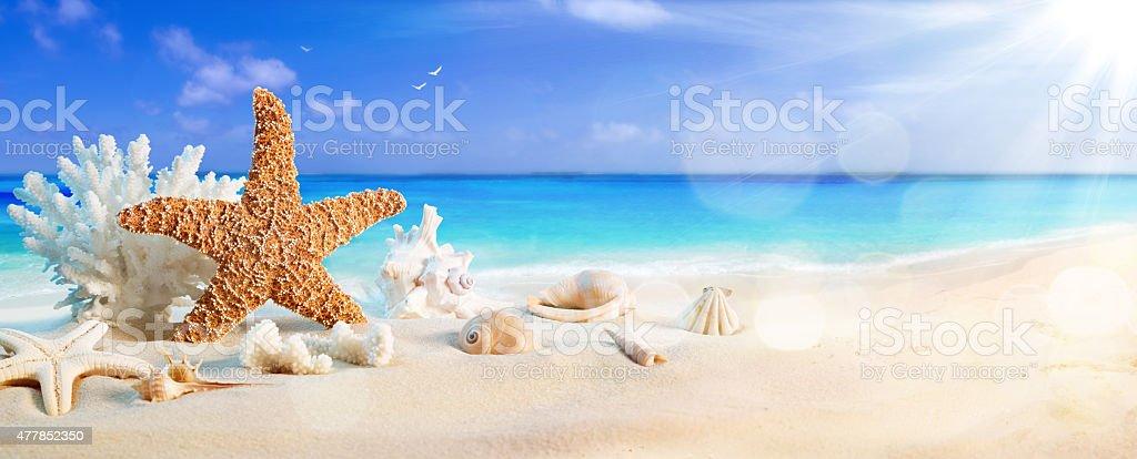 seashells on seashore in tropical beach - summer holiday background stock photo