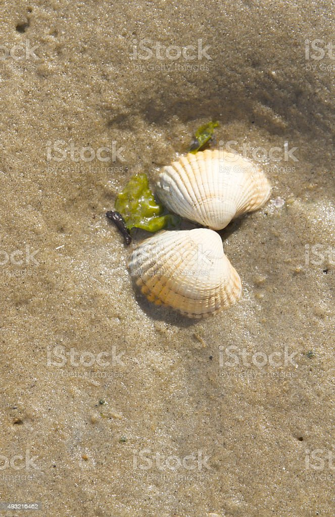 Seashells on the Beach stock photo
