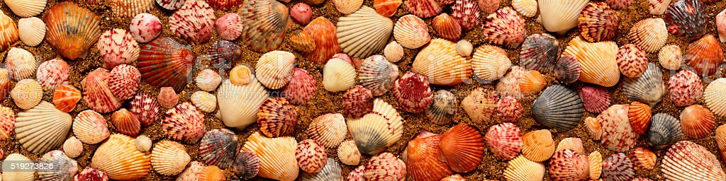 Seashells on the sand in a panoramic image stock photo