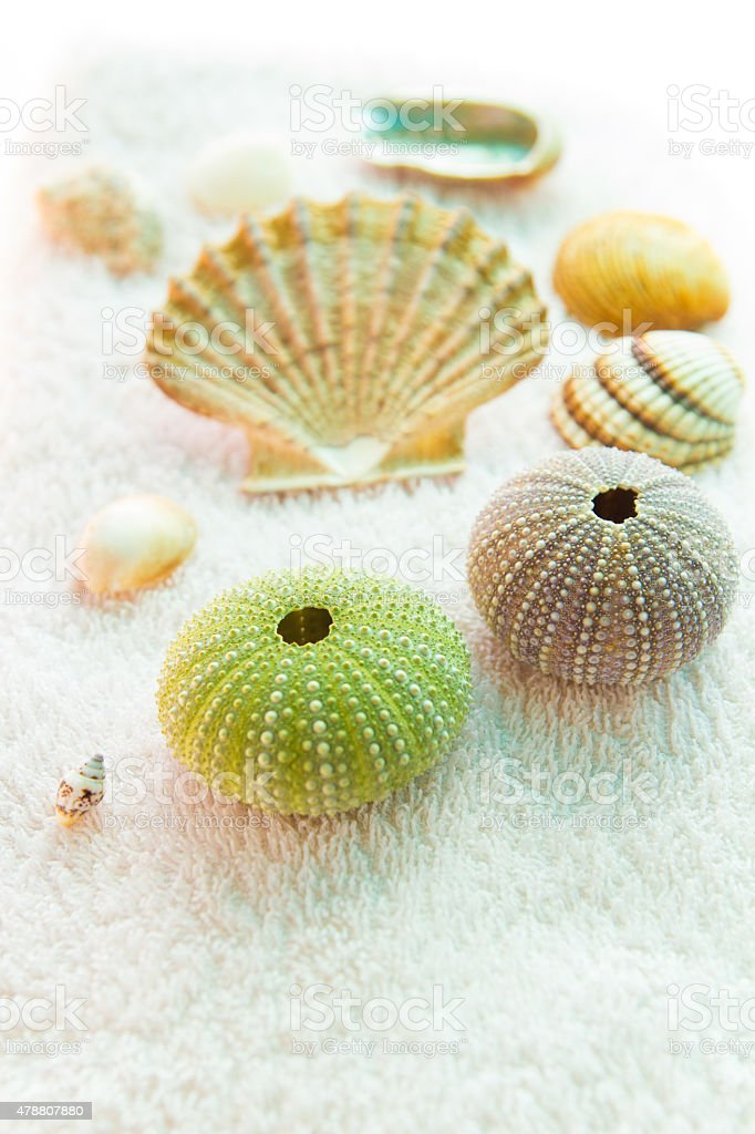 Seashells on white background stock photo