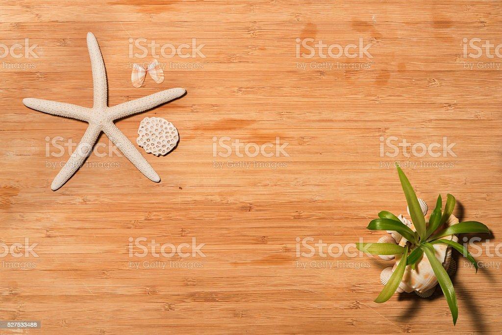 Seashells on wood stock photo