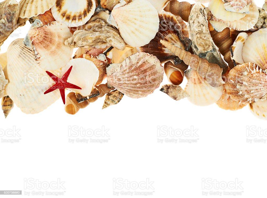 Seashells over the white background stock photo