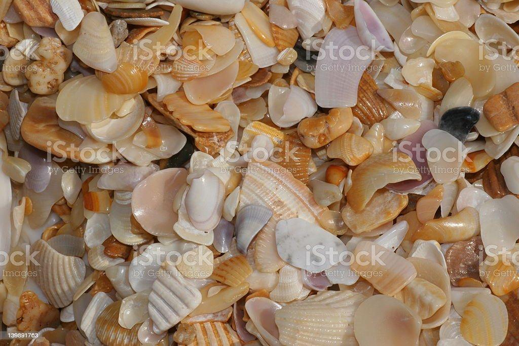 Seashells foto de stock libre de derechos